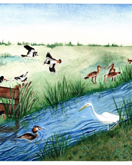 Illustratie vogels bij de Zaanse Schans